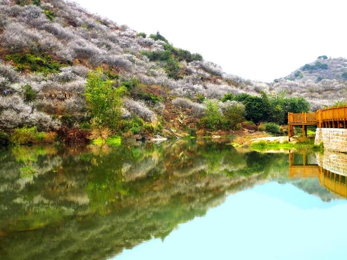 红星梅园生态风景区:园区风景独特,景中有物,物中有景,山,水,石互为