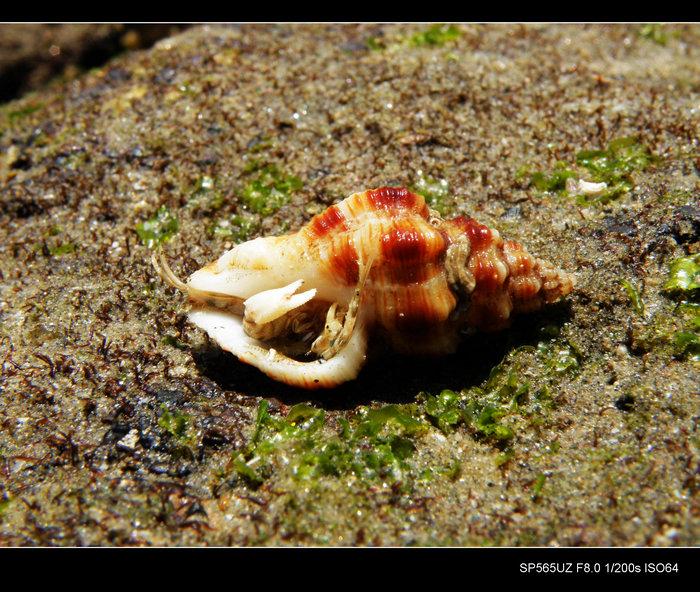 风动石 星空 螃蟹 抽象画廊